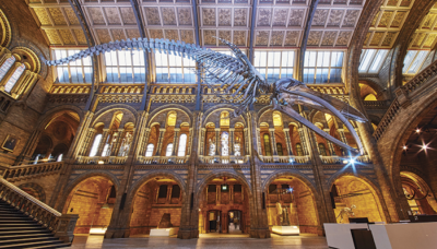 P16 17 blue whale hintze hall 4 credit trustees of nhm